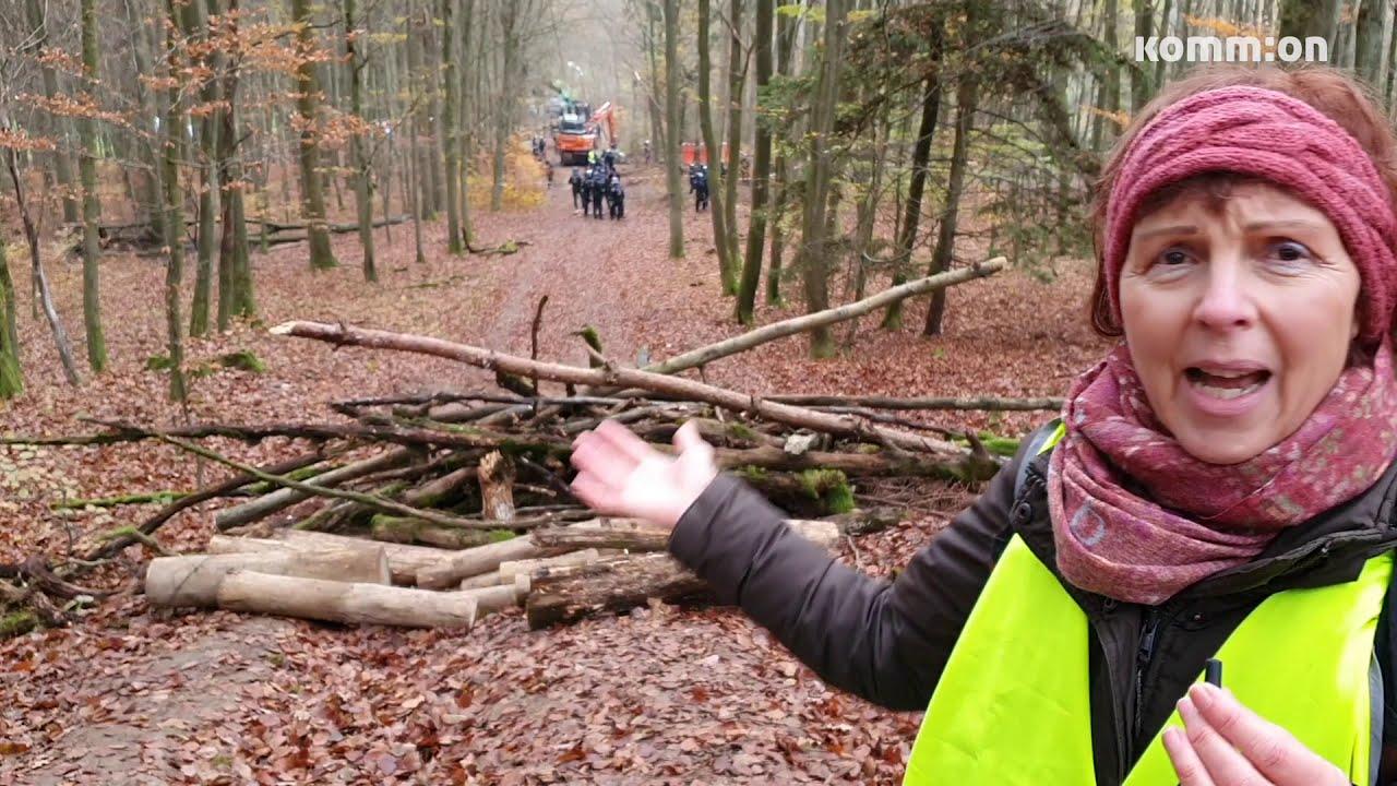 Stoppt die Räumung vom Dannenröder Wald #DanniBleibt